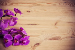 Orchid flowers on a wooden background Royalty Free Stock Photo