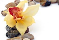 Orchid, fragrance, bath, decoration, flower, flora Stock Images