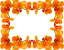 Orchid frame Stock Images