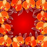 Orchid frame. Beautiful floral background frame with orange orchids Royalty Free Stock Photography