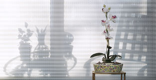 Orchid with Furniture Silhouettes Royalty Free Stock Photo