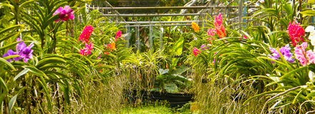 Orchid garden. Colorful flowers of orchid in tropical garden Royalty Free Stock Images