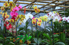 Orchid garden Royalty Free Stock Photos