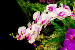 Orchid in the garden. Orchid in the a garden royalty free stock photography