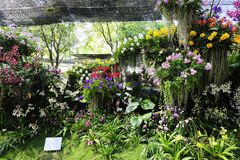Orchid Garden. Beautiful  orchid  garden in the Thailand Royalty Free Stock Photography