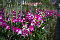 Orchid Garden Stock Images