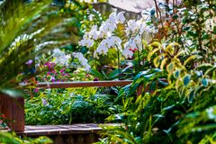 Orchid Garden Mimic tropical forest stock image