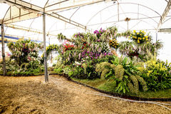 Orchid garden. In samutsakhon thailand Royalty Free Stock Photography