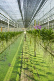 Orchid garden Stock Photography