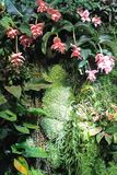 Orchid garden Royalty Free Stock Images