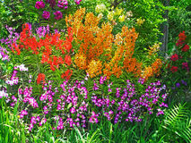 Orchid  Garden Stock Image