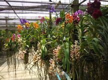 Orchid Garden. Garden with various types of orchids Stock Photography