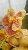 Orchid in garden. Yellow petals garden decor Stock Photo