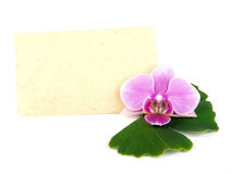 Orchid and Ginkgo Royalty Free Stock Image