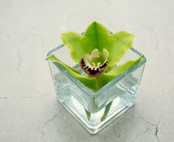 Orchid in a glass Royalty Free Stock Images