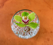 Orchid in glass Royalty Free Stock Photo