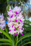 Orchid in the glass house Royalty Free Stock Photography