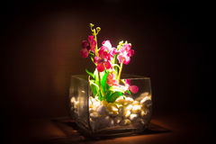 Orchid in a glass vase. With backlight stock images