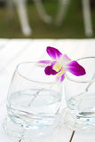 Orchid on Glass water nature palce Stock Image