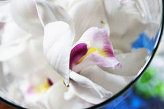 Orchid in a glass Stock Image