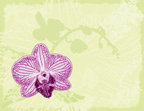 Orchid on a Green Background Stock Image