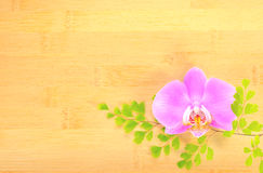 Orchid and green branch on bamboo Royalty Free Stock Photo