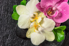 Orchid and green leaves. Spa concept. Fresh flowers decoration Royalty Free Stock Photography
