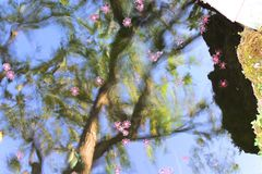 Orchid group pink flowers yellow spots in the middle of trees. Stock Image