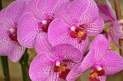 Orchid Grouping Stock Photo