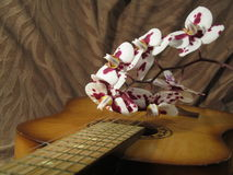Orchid on the guitar. Orchid on guitar for a romantic mood stock photo