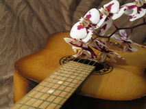 Orchid on the guitar. Orchid on guitar for a romantic mood stock images