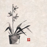 Orchid hand drawn in Japanese style Royalty Free Stock Photography