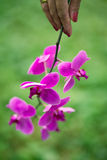 Orchid at hand Stock Photography
