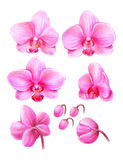 Orchid01 Royalty Free Stock Images