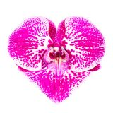 Orchid heart Stock Photography