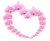 Orchid Heart Stock Images