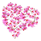 Orchid heart on white background Stock Images