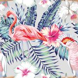 Orchid hibiscus flamingo parrot pattern light Stock Photos