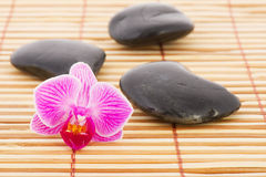 Orchid and hot stones Stock Photos
