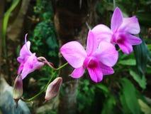 Orchid i trädgården royaltyfri bild