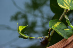 Orchid i vatten royaltyfri fotografi