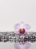 Orchid On Ice Stock Photography