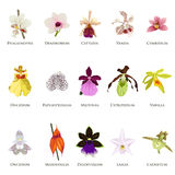 Orchid Icons. A vector illustration of orchid icon sets royalty free illustration