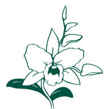 Orchid Illustration Black and White Stock Photography