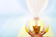 Orchid in the interior close up Stock Images