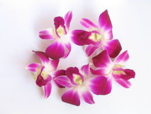Orchid isolated. Orchid against white background Stock Photos