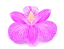 Orchid. Isolated with a white background Stock Photo