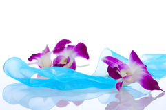 Orchid. Isolation Royalty Free Stock Photos