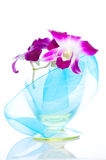 Orchid. Isolation Stock Image