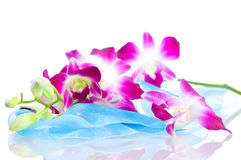 Orchid. Isolation on white Royalty Free Stock Photos